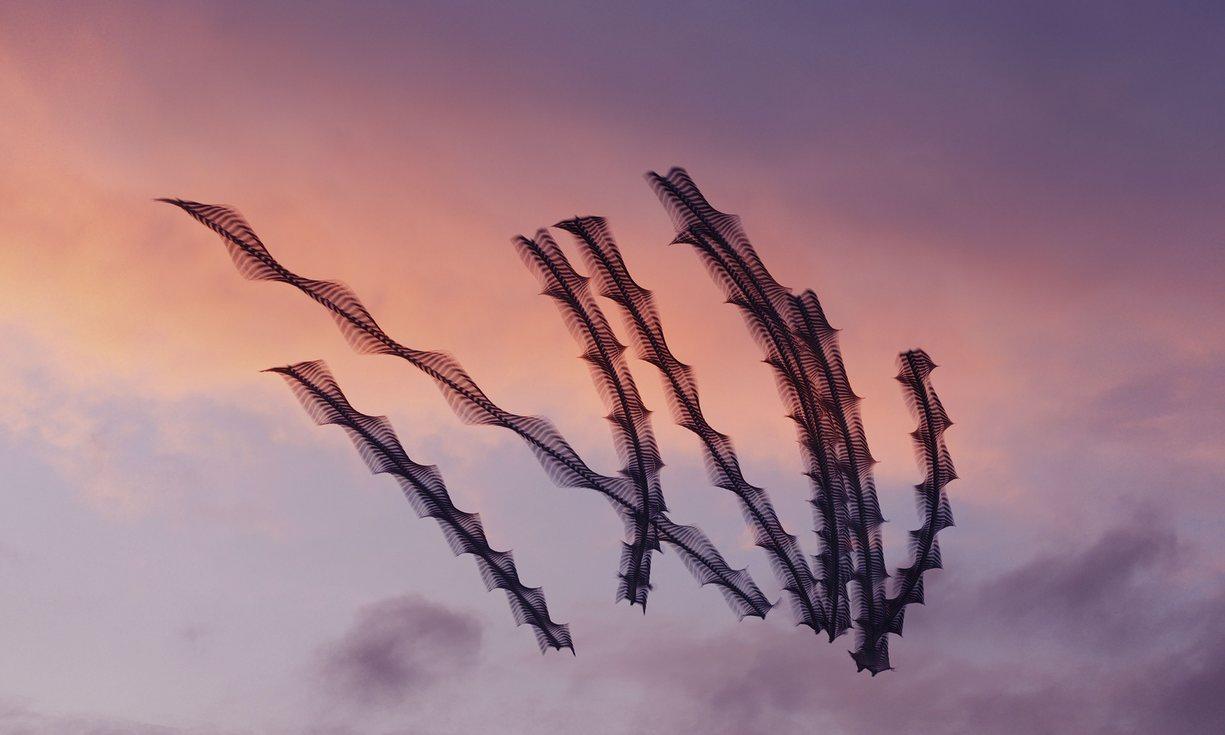 European herring gulls at Llobregat Delta (c) Xavi Bou